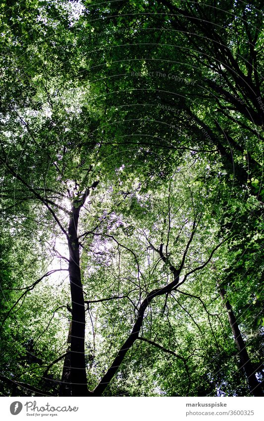 Forest leaves Forest atmosphere Branches and twigs Leaf canopy green Nature reserve