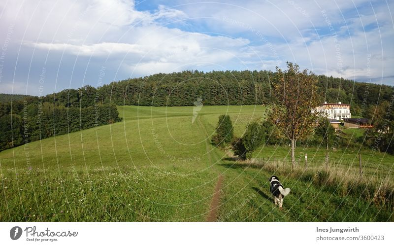 go for a walk Dog Walk the dog To go for a walk Animal Pet Looking Cuddly already Pelt Mammal Day Exterior shot Colour photo Nature Landscape Field Movement