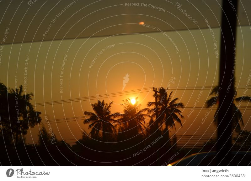 Thai sunset palms Sunset Shadow Asia Thailand Light Dusk afterglows Palm tree Wanderlust Trip Adventure Freedom Night shot Night sky Tourism Far-off places