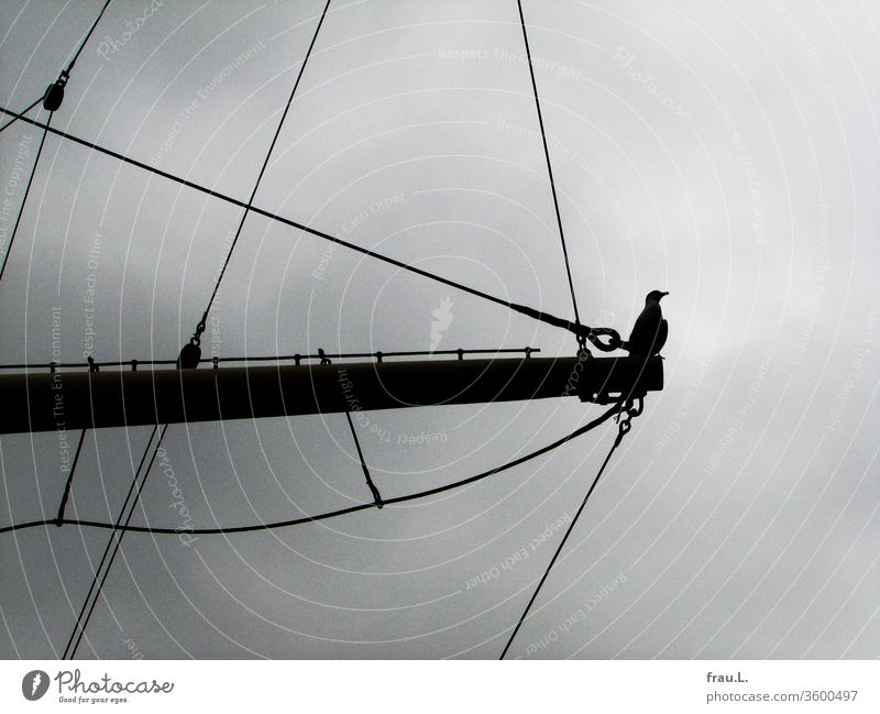 The seagull would love to be a figurehead and so she practiced it on the jib boom of the sailing ship. move birds Sky Harbour Elbe Sailing ship museum ship