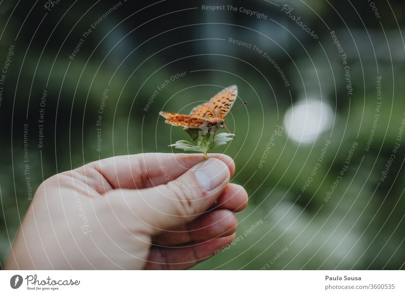 Hand holding leaf with butterfly Butterfly butterflies Nature Fragile Fragility Environment Insect Close-up Animal Colour photo Day Wild animal Wing