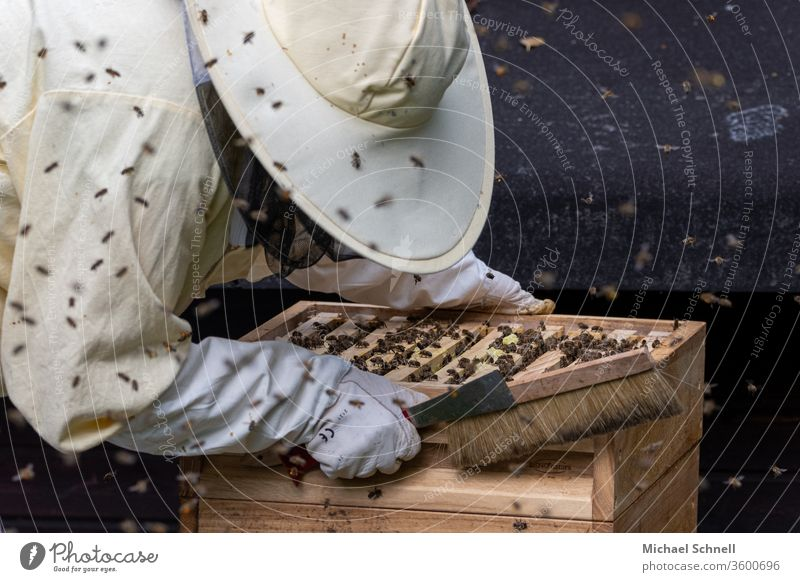 Beekeeper at a prey (beehive) with many bees keep beekeepers Nature Animal Insect Honey Bee-keeper Bee-keeping Beehive Food beekeeping natural Healthy