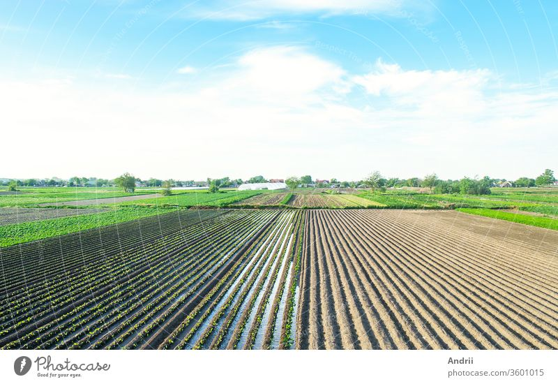 Farm field is planted with agricultural plants. Watering the crop. Agro industry, agribusiness. Farming, european farmland. Traditional irrigation system. Growing and producing food. Rural countryside