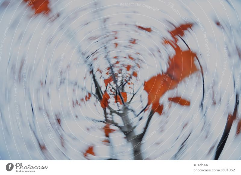 wiping and turning autumn tree Nature rotation Rotation Movement Motion blur Dynamics Round Circle blurred foliage leaves Autumn Abstract Exterior shot Deserted