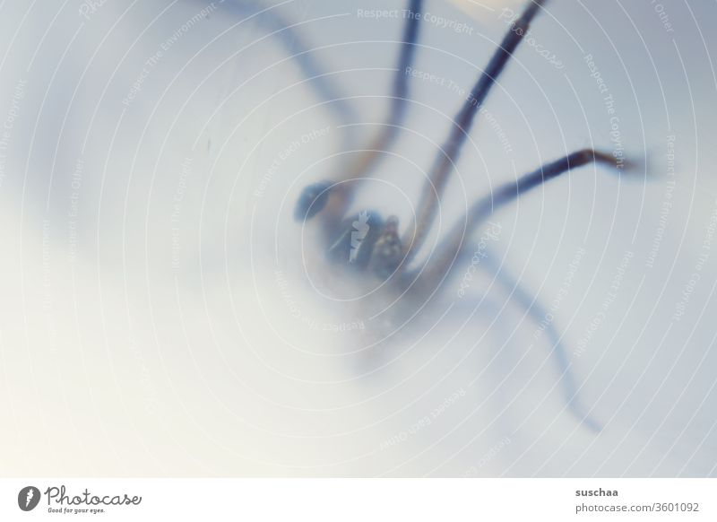 spider blurred photographed through a glass Bite disgusting awesome terrible House angle spider Transparent Captured Threat Crawl Disgust Fear Spider legs