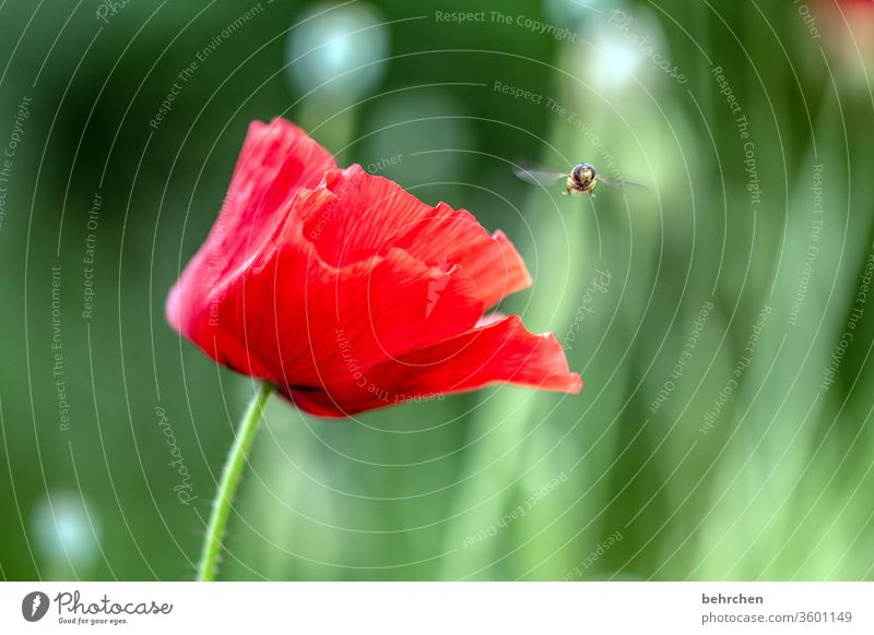 landing site Contrast green Animal portrait Wild animal Hover fly Colour photo spring beautifully Nature Plant Red Exterior shot Summer Fragrance fragrant