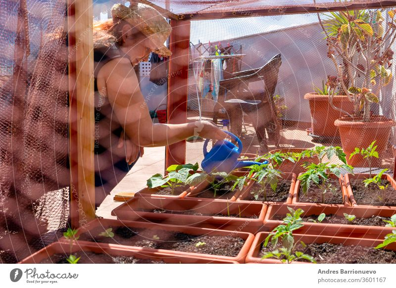 Red-haired woman in a straw hat tending her urban garden protected by net on the terrace of the house green pot working tomatoes spring growing bio home happy