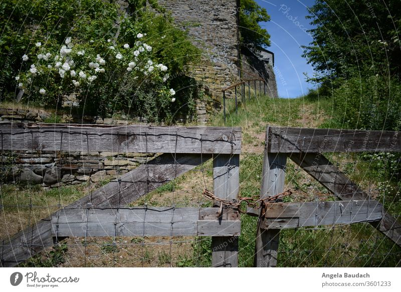 Gate to the castle garden Goal Wooden gate door wood Fence pink roses white rose Lanes & trails off Summer Blue sky green Nature Lock Castle yard Castle grounds