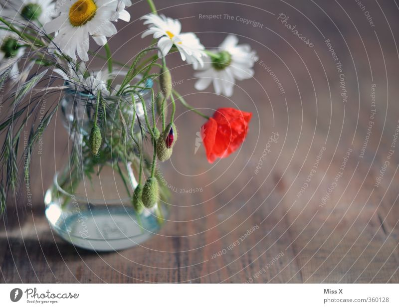 farmhouse bouquet Living or residing Decoration Table Spring Summer Flower Blossom Blossoming Fragrance Faded Meadow flower Rural Country house