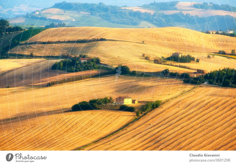 Marches (Italy) - Landscape at summer, farm agriculture ancona beauty in nature color country cultivated day europe farmhouse field flower green hill horizontal
