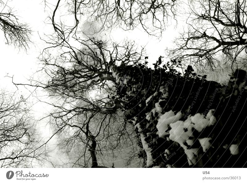 Nature Sky Tree Clouds Life Snow Tall Branch Vessel Dominant Surround