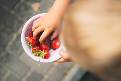 Berries picked from our own garden girl bowl shell Strawberry strawberry Fruity Red Delicious salubriously vitamins Garden fruit Fresh Food Colour photo Summer