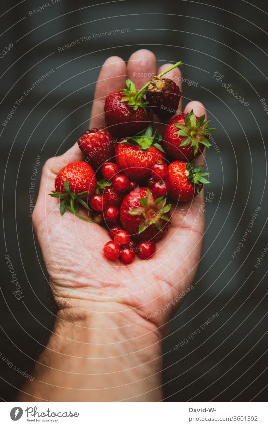 hold fresh berries from the garden in your hand freshness Berries Strawberry Redcurrant Raspberry Fresh Fruity Juicy Delicious salubriously Vitamin-rich