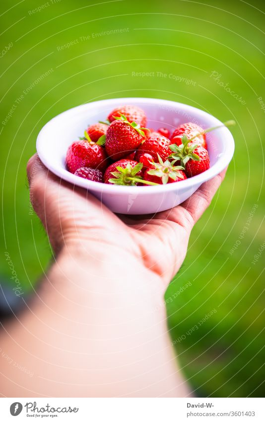 a small bowl with red berries is held by one hand Strawberry Time fruit Bird's-eye view Neutral Background Deep depth of field fruit varieties berry fruit