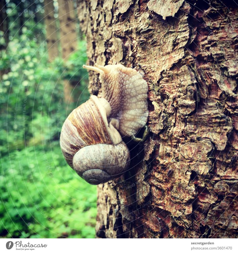 wetlands Crumpet Snail shell Snail slime escargot Tree trunk tree Pattern Forest Brown green Slowly propel slowly slow life Tall high up Upward courageous bark