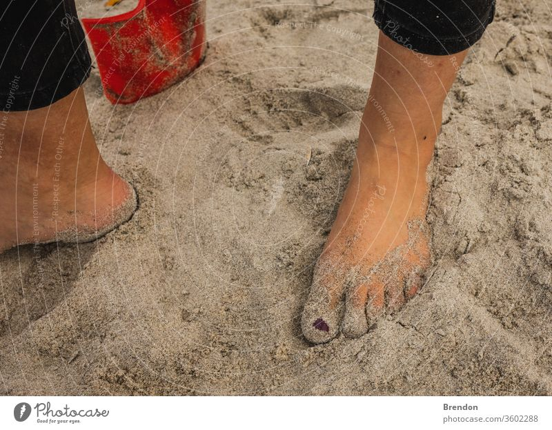 Sandy Feet surrounded by shells on a summers day at the beach background barefoot beautiful beauty blue caribbean coast coastline concept feet female footprint