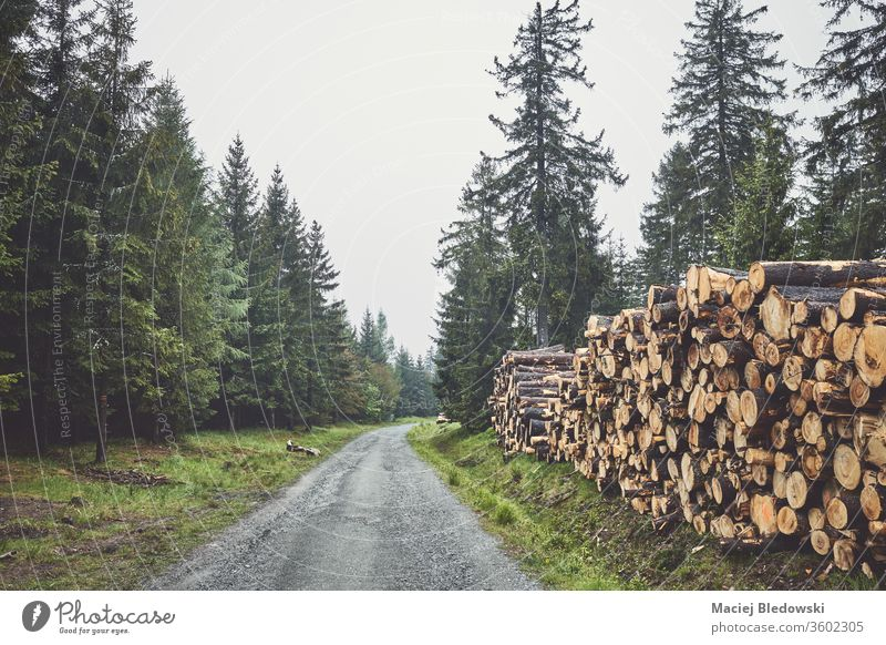 Log trunks pile by a road in forest on a foggy rainy day. log timber forestry industry lumber tree stack cut nature wood deforestation green material woodland