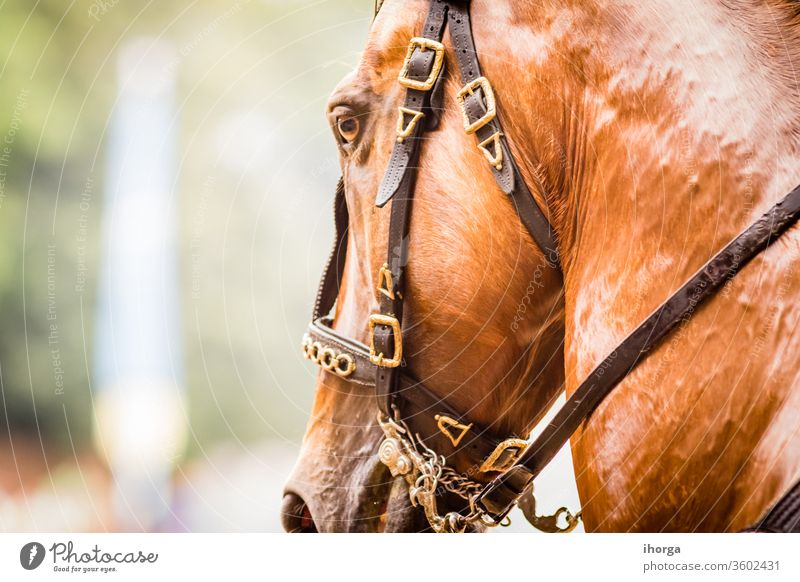 portrait of horse on the outside Looking Nobody adult animal background beautiful beauty brown close-up closeup color cute equestrian equine eye face farm field