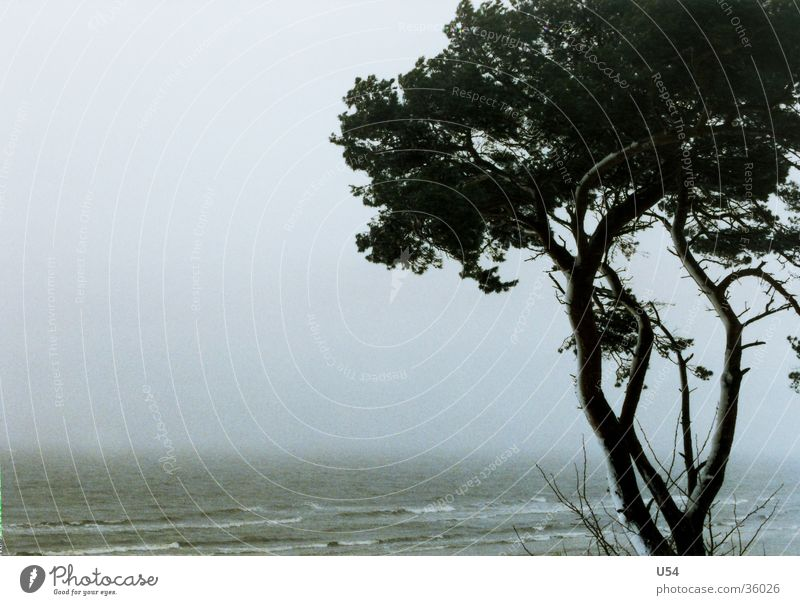 coastal fog Coast Winter Gale Tree Beach Waves Baltic Sea Wind Sand Water