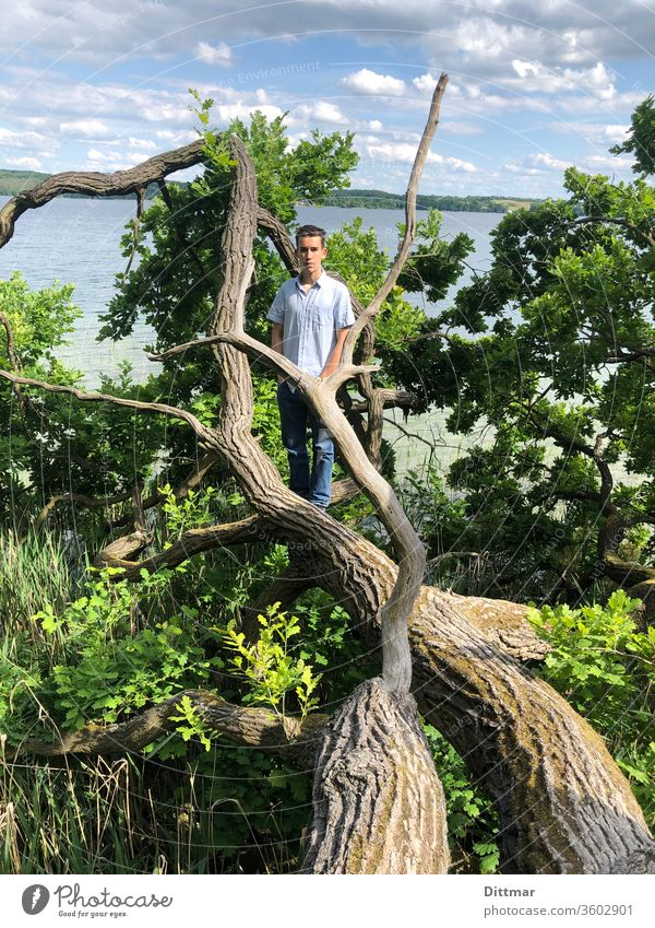 Young man stands on a tree that has fallen into a lake younger Oak tree family vacation active Attractive Topple over Lake