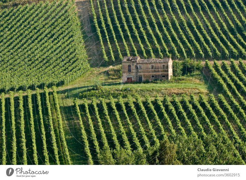 Farm in Italy farm farmhouse vineyard wine tree field landscape agriculture ruin cultivate italy italian marche ancona green summer panorama panoramic view