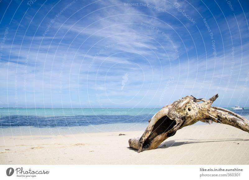 beach- GUT Senses Relaxation Calm Meditation Vacation & Travel Tourism Trip Adventure Far-off places Cruise Summer Summer vacation Beach Ocean Island Waves