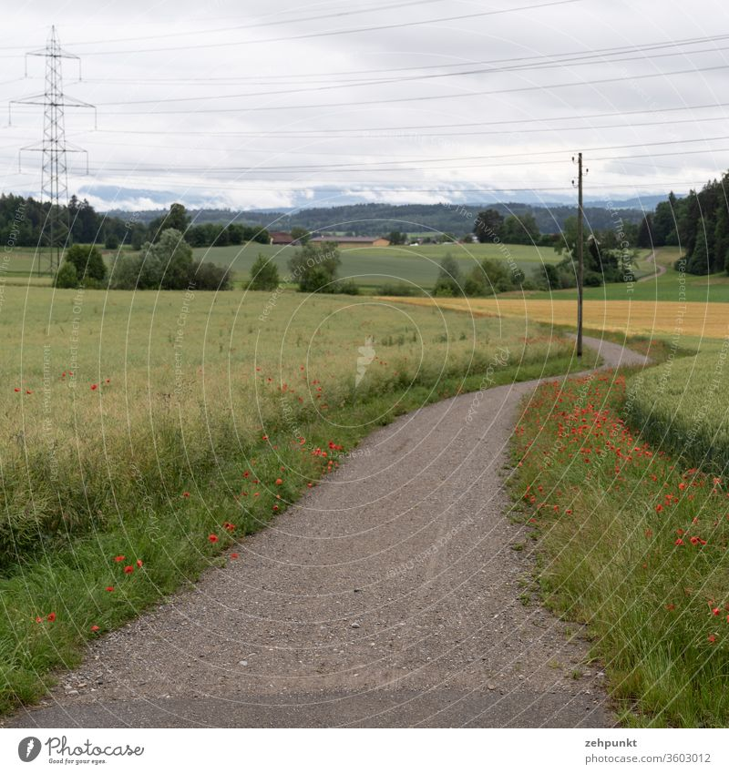 A path winds through fields lined with corn poppy, crossed by a power line. In the background the Alps disappear in the clouds off the beaten track
