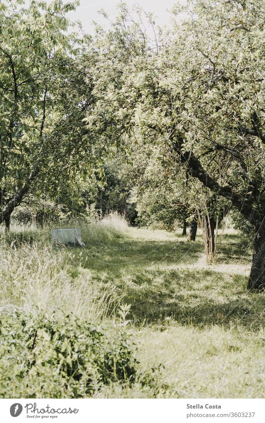 Fruit plantation apple trees huts Garden Cherry trees Nature shot out green Agriculture Sustainability nature conservation nobody Summer ecologic Plantation
