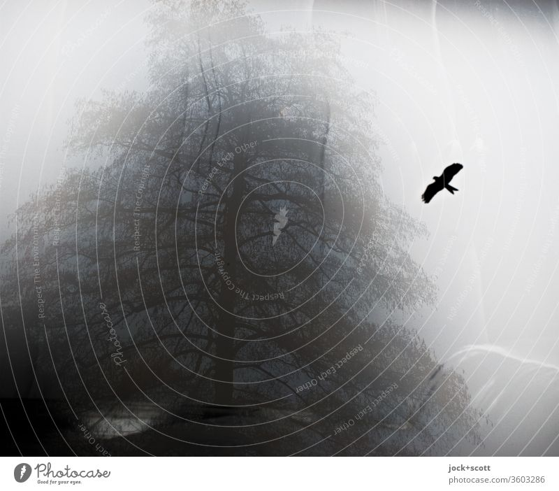 Illusion of flying through time and space Window birds Condensation Flare Dreary Silhouette Hazy Misted up Moody chill tree Winter effect Irritation