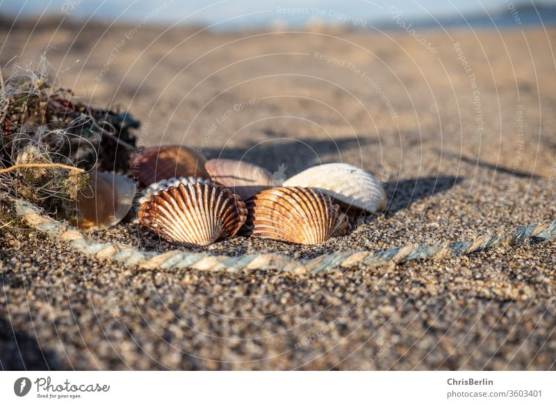 shells on the beach Mussel Multiple Beach evening light Rope Grains of sand Nature