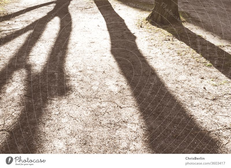 Shadow through trees Shadow play Sun Tree trunk Nature