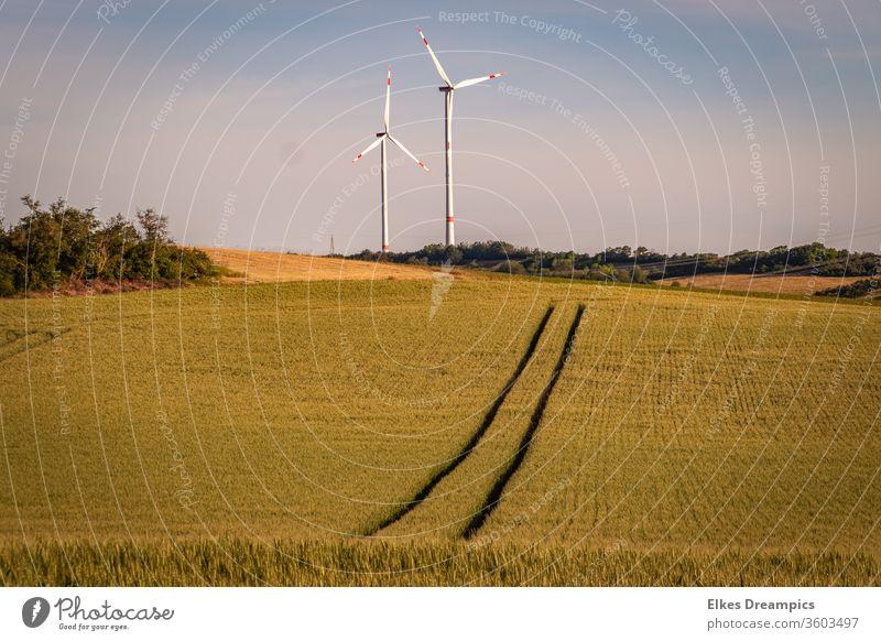 To the wind turbines Field Exterior shot Summer Wheatfield windmills