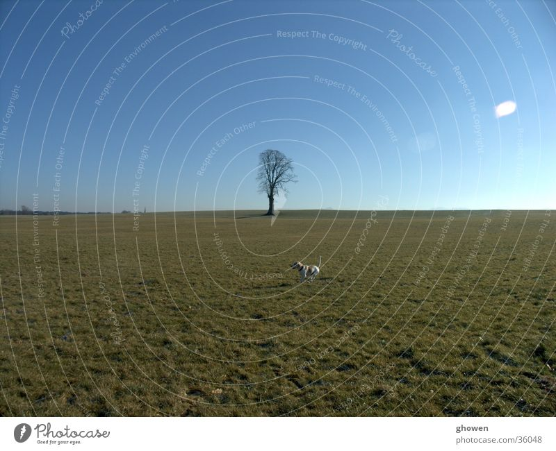 Sky Tree Winter Meadow Dog Beagle
