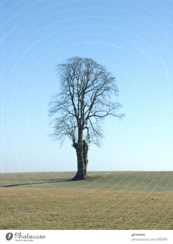 Sky Meadow Branch