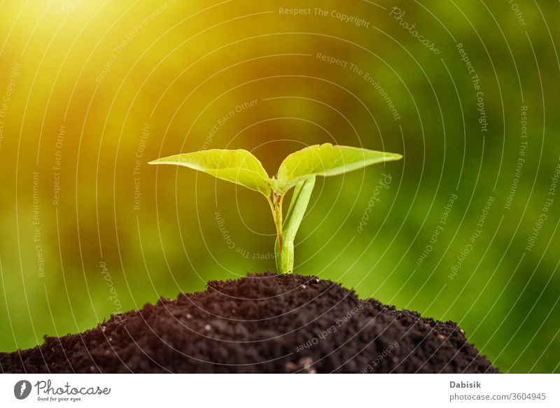 Young plant growing from soil, closeup. Ecology and plant care. New life concept growth seedling sprout garden sunlight spring sunshine green nature young