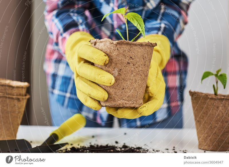 Woman hands in a yellow gloves transplating plant. Plant care concept transplant woman natural nature grow gardening pot leaf ground green soil growing