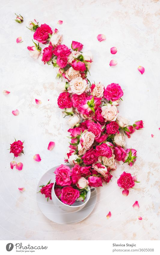 Red Rose Tea.  Stream of rose flowers flowing in a tea cup on white rustic  background. Top view, blank space above antioxidant aroma beauty beverage bloom