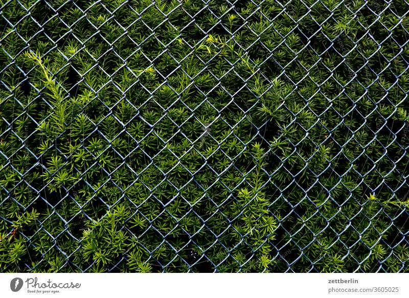 Thuja with wire mesh fence Branch Relaxation Garden allotment Garden allotments Deserted Nature Plant tranquillity Garden plot shrub Copy Space thuja Hedge