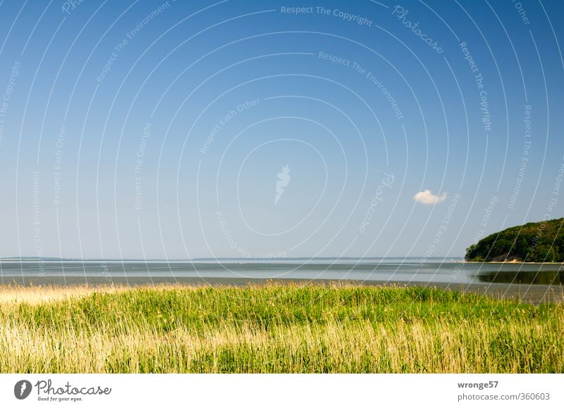 Bodden Clouds Nature Landscape Plant Water Sky Horizon Summer Beautiful weather Grass Common Reed Marsh grass Coast Baltic Sea Island Rügen Great Jasmund Bodden