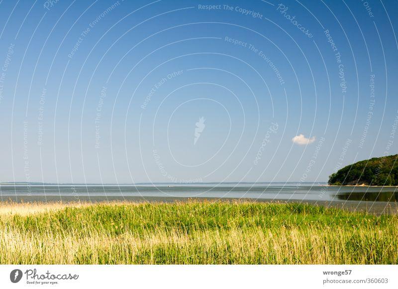 Sky Nature Water Summer Plant Landscape Clouds Grass Coast Horizon Island Beautiful weather Longing Baltic Sea Common Reed Wanderlust