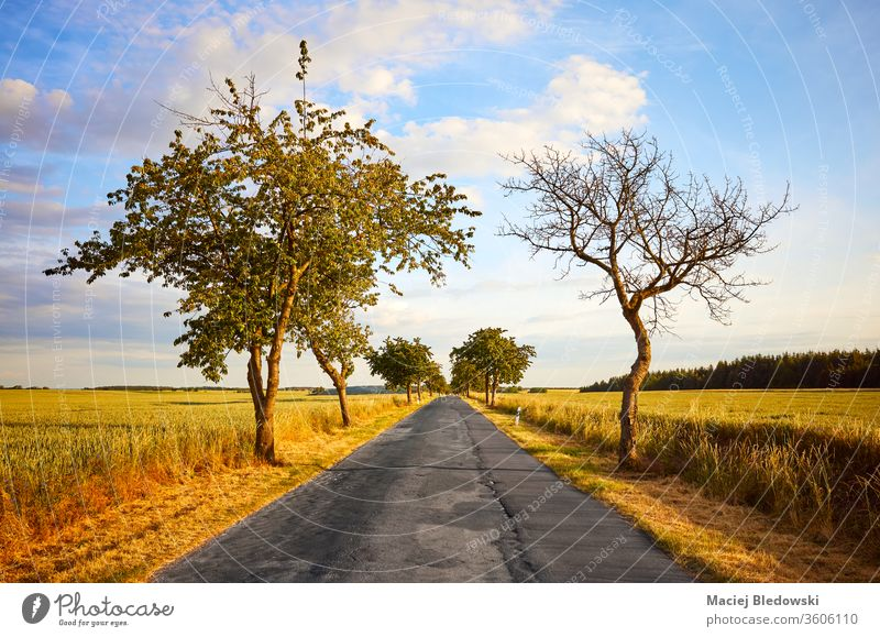 Rural road among crop fields at sunset. nature sky journey sunrise trip way asphalt empty rural scenic country tree scenery nobody drive landscape countryside