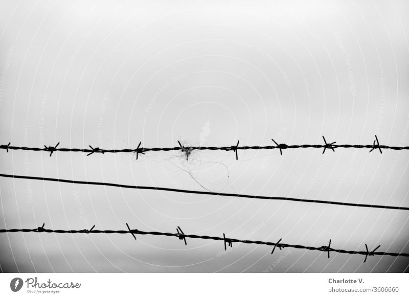 Barbed wire   and bad weather grey sky hair Pelt Bad weather Sky Wire Boundary lines Exterior shot Metal Barrier Dangerous Captured Black & white photo Gray