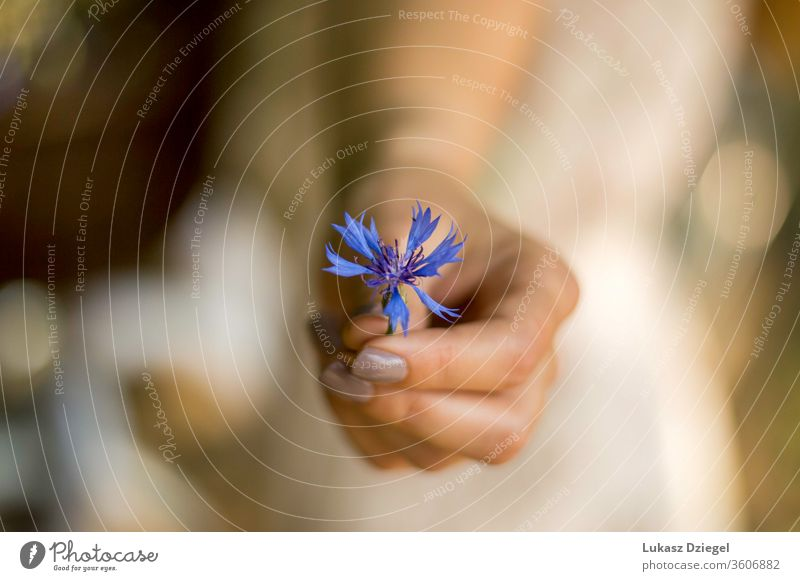 Woman's hand with a small blue flower freshness purity softness wellness human hands elegance tranquil environment lifestyle dream sensuality petal minimal