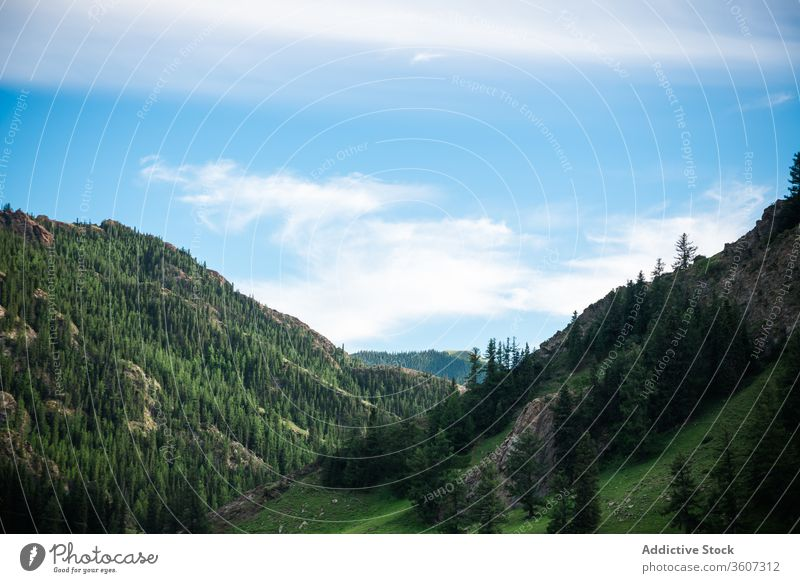 Picturesque valley with mountains and trees forest evergreen spectacular landscape scenic ridge highland woods nature balikun china blue sky cloud coniferous