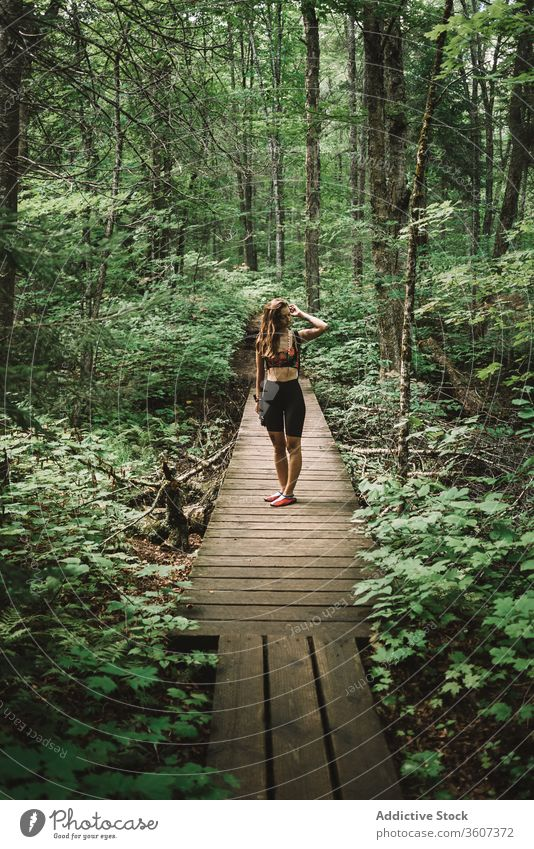 Female traveler on wooden path in forest woman explore joy weather la mauricie national park quebec canada female backpack lumber green nature tree adventure