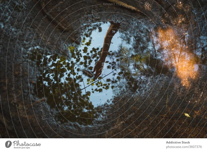 Reflection of hand in puddle in forest water reflection ground wet tree branch national park la mauricie quebec canada arm calm nature tranquil serene peaceful