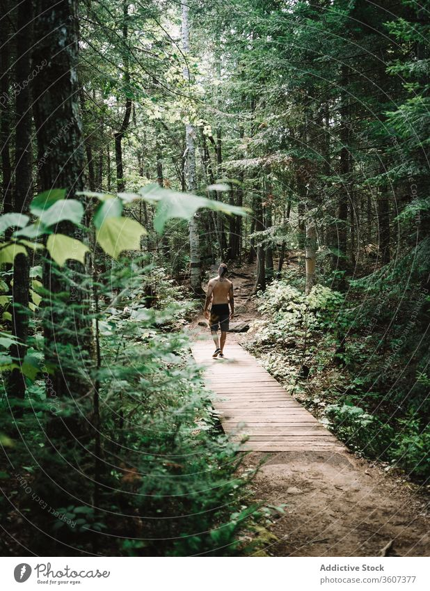 Male traveler on wooden path in forest man explore joy weather la mauricie national park quebec canada lumber green nature tree adventure journey hike trekking