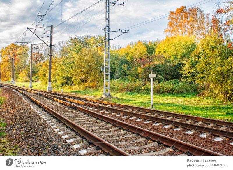Railway in autumn forest Nature Forest Autumn To fall rail foliage Landscape Yellow tree Holiday season leaves pennant natural Orange Sunlight already Outdoors