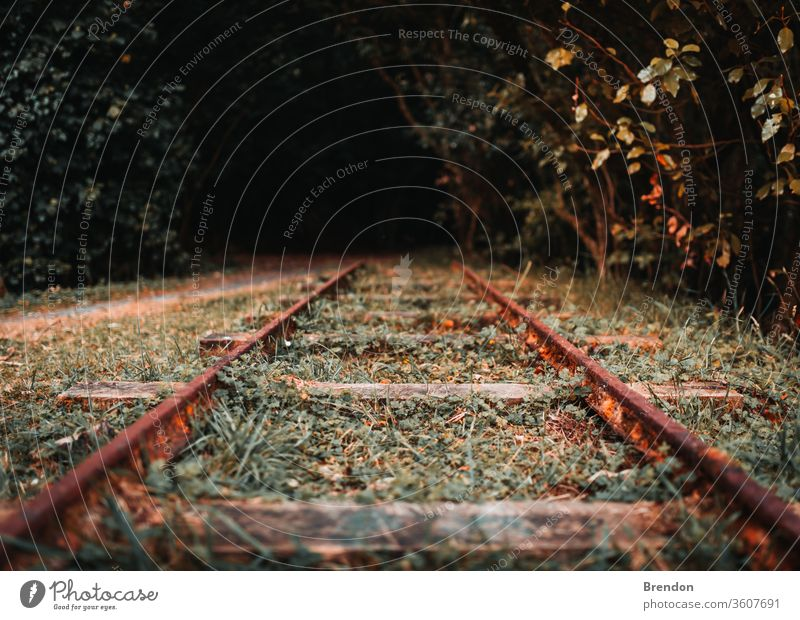 Railroad Tracks in Autumn railroad railway train track travel transportation tracks rails autumn steel nature forest line fall landscape journey path metal