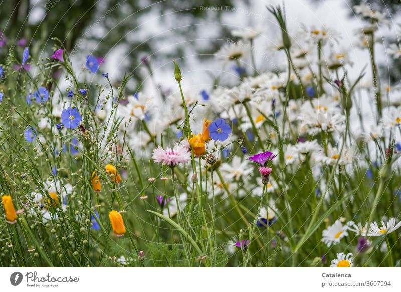 A colourful flower meadow wild flowers Meadow Nature Plant Blossoming spring bleed Garden Flower meadow natural fragrant green Blue Orange Pink Linen margarite